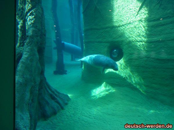 Delphine Unterwasser