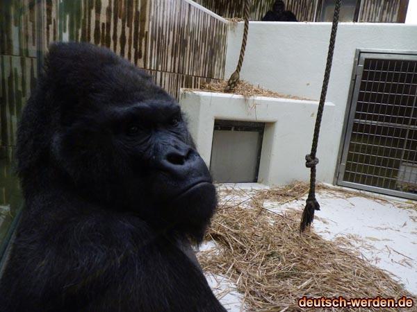 Schwarze Gorilla ähnelt an King-Kong
