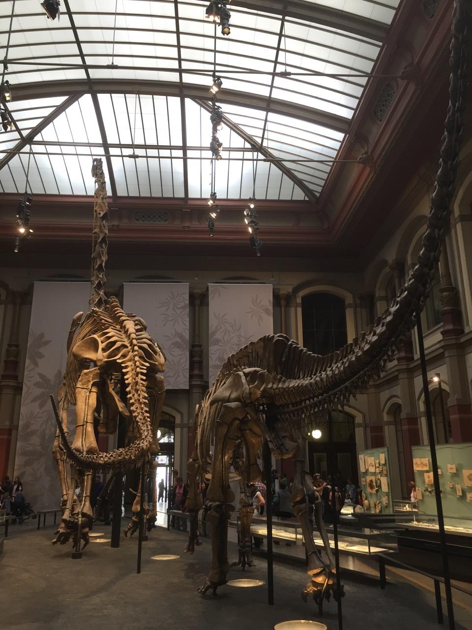 Berlin Dinosaurier Museum